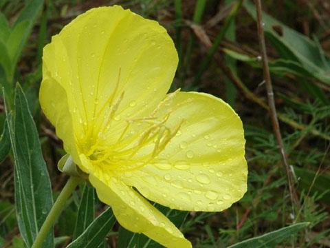 Image http://bioimages.vanderbilt.edu/lq/hessd/woemam-flside0143e5453.jpg