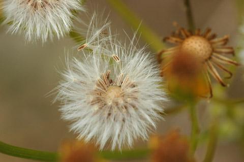 Image http://bioimages.vanderbilt.edu/lq/hessd/wpaan6-fr0069-1x1p2e5332.jpg
