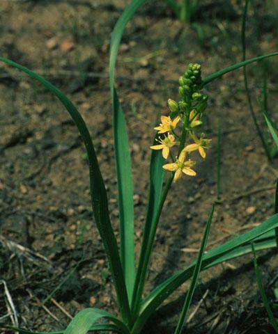 Image http://bioimages.vanderbilt.edu/lq/hessd/wsccr--wp0000326-19e5475.jpg
