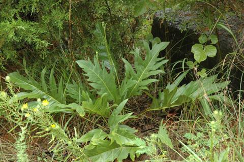 Image http://bioimages.vanderbilt.edu/lq/hessd/wsipi2-wp0372e5370.jpg