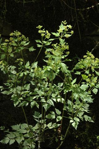 Image http://bioimages.vanderbilt.edu/lq/hessd/wthba--wp0129e5380.jpg