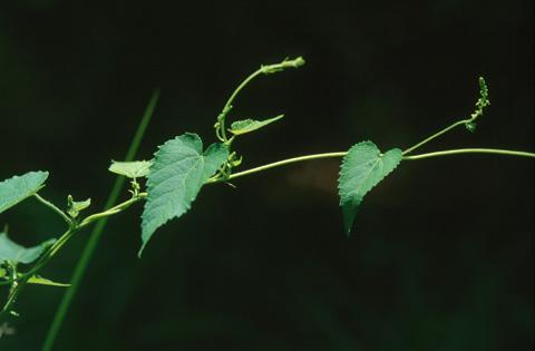 Image http://bioimages.vanderbilt.edu/lq/hessd/wtrco--wp010616-12e5385.jpg