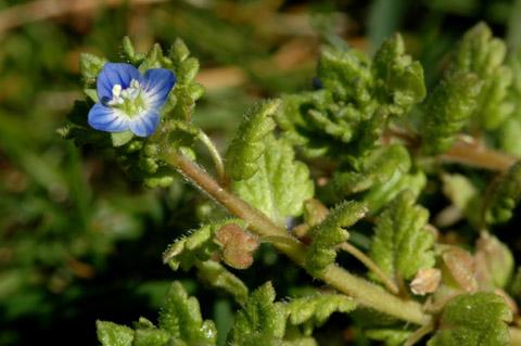 Image http://bioimages.vanderbilt.edu/lq/hessd/wvepo--fl0001e5388.jpg