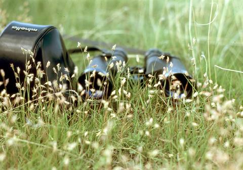 Image http://bioimages.vanderbilt.edu/lq/kaufmannm/wbuda--wp-mke036.jpg