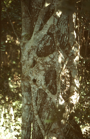 Image http://bioimages.vanderbilt.edu/lq/kaufmannm/wfiau--br-mke162.jpg