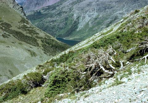 Image http://bioimages.vanderbilt.edu/lq/kaufmannm/wpial--wpmke101.jpg