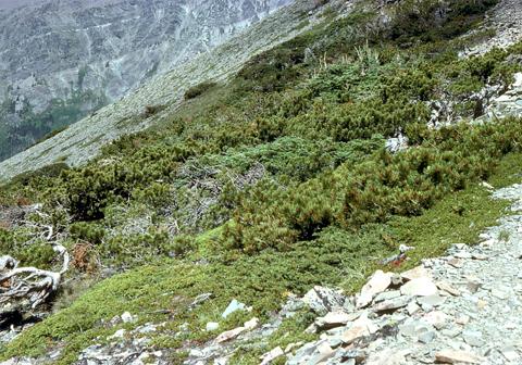 Image http://bioimages.vanderbilt.edu/lq/kaufmannm/wpial--wpmke102.jpg
