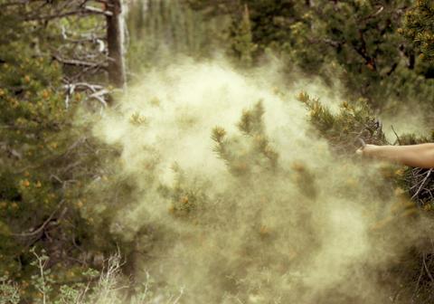 Image http://bioimages.vanderbilt.edu/lq/kaufmannm/wpico--copollen-mke106.jpg