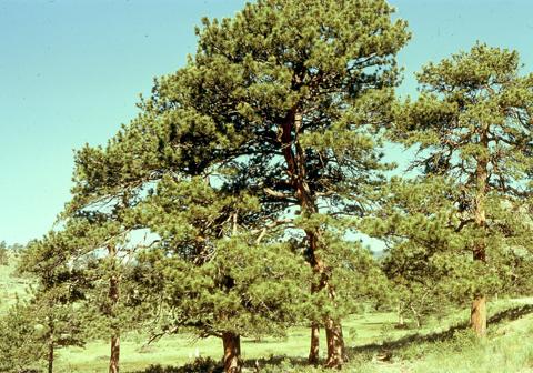 Image http://bioimages.vanderbilt.edu/lq/kaufmannm/wpipo--wp-mke053.jpg