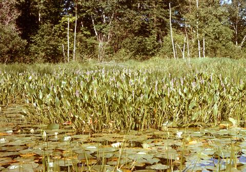 Image http://bioimages.vanderbilt.edu/lq/kaufmannm/wpoco14wp-inflower-mke170.jpg