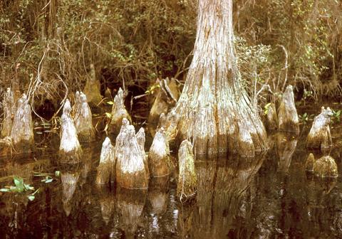 Image http://bioimages.vanderbilt.edu/lq/kaufmannm/wtadi2-wpknees-mke174.jpg
