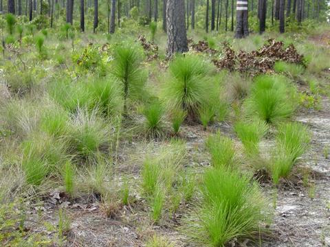Image http://bioimages.vanderbilt.edu/lq/kellyl/wpipa2-wpgrass-stagelk436.jpg