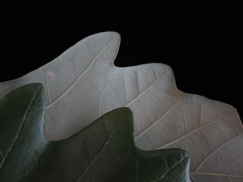 Image http://bioimages.vanderbilt.edu/lq/kirchoff/wac1479.jpg