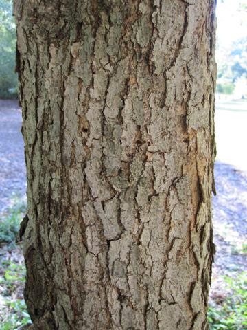 Image http://bioimages.vanderbilt.edu/lq/kirchoff/wac1483.jpg