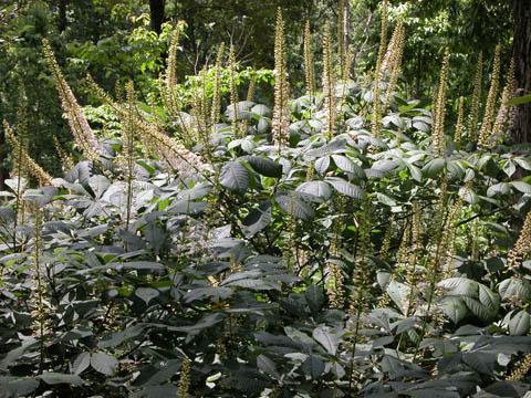Image http://bioimages.vanderbilt.edu/lq/kirchoff/waepa2-wpb5146.jpg