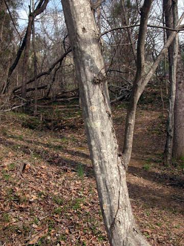 Image http://bioimages.vanderbilt.edu/lq/kirchoff/wcaca18brb5062.jpg