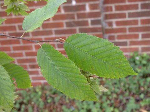 Image http://bioimages.vanderbilt.edu/lq/kirchoff/wcaca18lfb5068.jpg