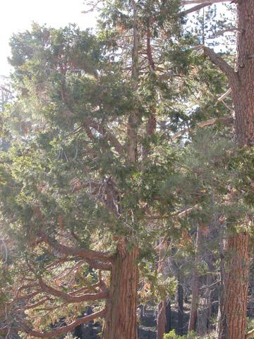 Image http://bioimages.vanderbilt.edu/lq/kirchoff/wcade27wp11bk515.jpg
