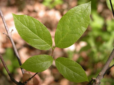Image http://bioimages.vanderbilt.edu/lq/kirchoff/wcafl22lfseveralb5083.jpg