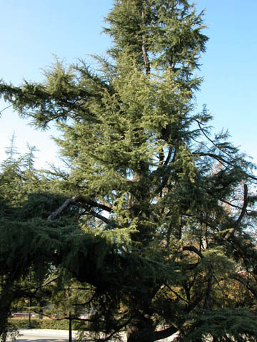 Image http://bioimages.vanderbilt.edu/lq/kirchoff/wcede2-wpb5194.jpg