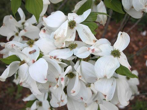 Image http://bioimages.vanderbilt.edu/lq/kirchoff/wcofl2-flseveralb5085.jpg