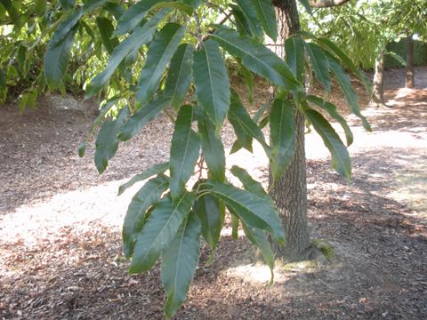 Image http://bioimages.vanderbilt.edu/lq/kirchoff/wem2054.jpg