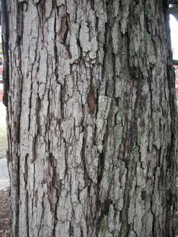 Image http://bioimages.vanderbilt.edu/lq/kirchoff/wem2107.jpg