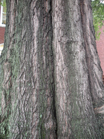 Image http://bioimages.vanderbilt.edu/lq/kirchoff/wem2121.jpg