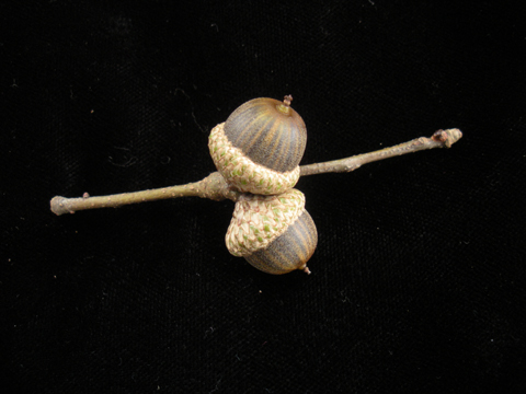 Image http://bioimages.vanderbilt.edu/lq/kirchoff/wem2132.jpg