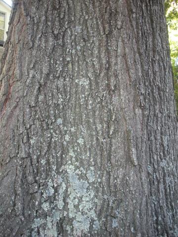 Image http://bioimages.vanderbilt.edu/lq/kirchoff/wem2228.jpg