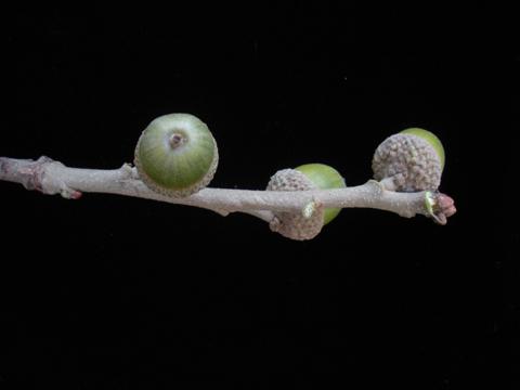 Image http://bioimages.vanderbilt.edu/lq/kirchoff/wem2302.jpg