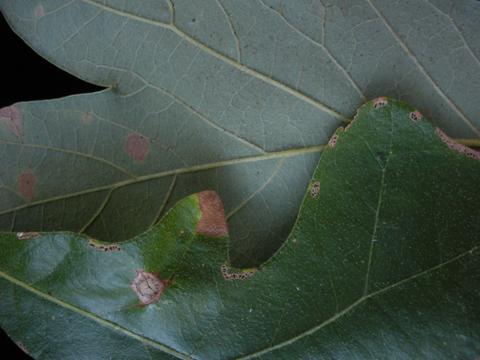 Image http://bioimages.vanderbilt.edu/lq/kirchoff/wem2307.jpg