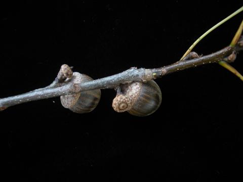 Image http://bioimages.vanderbilt.edu/lq/kirchoff/wem2347.jpg