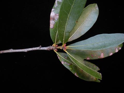 Image http://bioimages.vanderbilt.edu/lq/kirchoff/wem2368.jpg