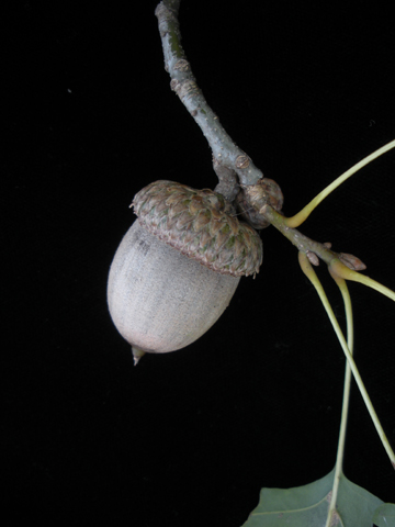 Image http://bioimages.vanderbilt.edu/lq/kirchoff/wem2557.jpg