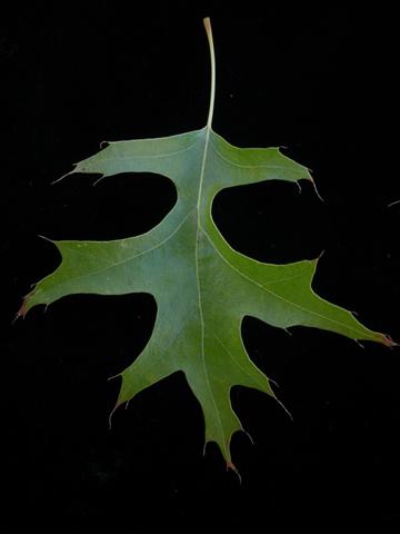 Image http://bioimages.vanderbilt.edu/lq/kirchoff/wem2598.jpg