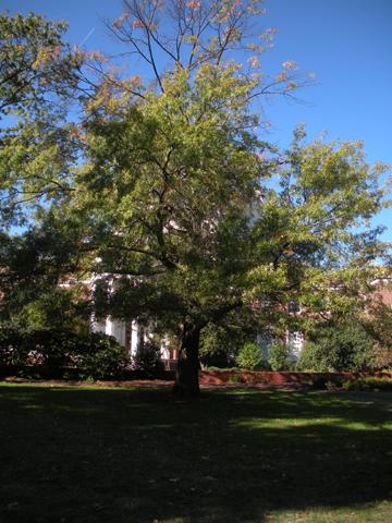 Image http://bioimages.vanderbilt.edu/lq/kirchoff/wem2604.jpg