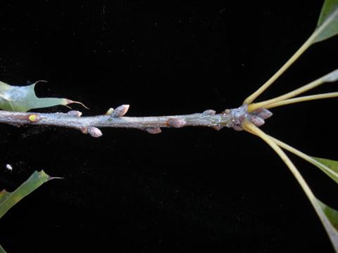 Image http://bioimages.vanderbilt.edu/lq/kirchoff/wem2613.jpg