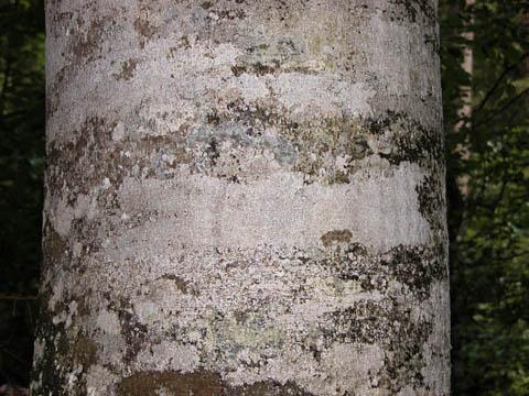 Image http://bioimages.vanderbilt.edu/lq/kirchoff/wfasy--brb5133.jpg
