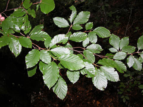 Image http://bioimages.vanderbilt.edu/lq/kirchoff/wfasy--lfdistantb5134.jpg