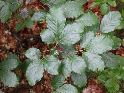 Image http://bioimages.vanderbilt.edu/lq/kirchoff/wfasy--lfseveralb5138.jpg