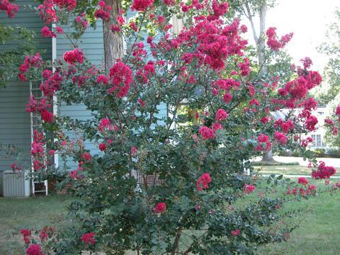 Image http://bioimages.vanderbilt.edu/lq/kirchoff/wlain--wppink-flowersb5164.jpg