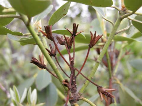 Image http://bioimages.vanderbilt.edu/lq/kirchoff/wrhca8-frb5113.jpg