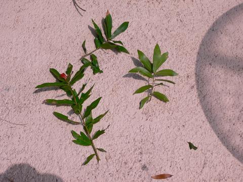 Image http://bioimages.vanderbilt.edu/lq/klipowiczs/wquvi--lf00385sk539.jpg