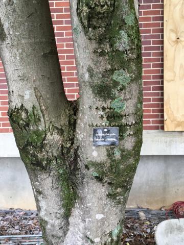 Image http://bioimages.vanderbilt.edu/lq/phoebusp/w2202.JPG