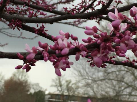 Image http://bioimages.vanderbilt.edu/lq/phoebusp/w2232.JPG