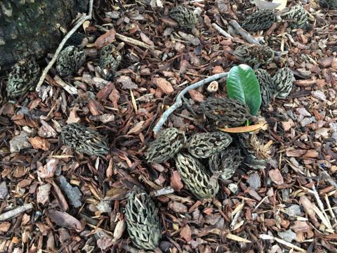 Image http://bioimages.vanderbilt.edu/lq/phoebusp/w2416.JPG