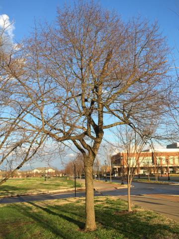 Image http://bioimages.vanderbilt.edu/lq/phoebusp/w2631.JPG