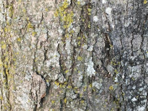 Image http://bioimages.vanderbilt.edu/lq/phoebusp/w2678.JPG