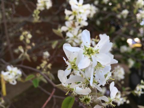 Image http://bioimages.vanderbilt.edu/lq/phoebusp/wIMG_9130.JPG